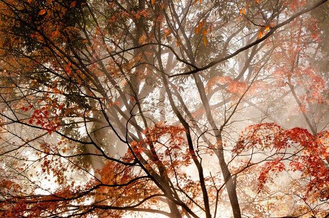 秋といえば金木犀と志村正彦